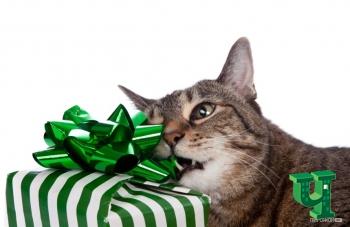 Как завернуть подарок, когда кот рядом
