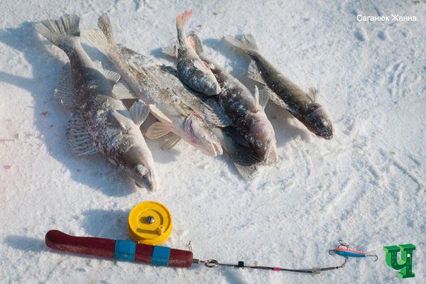 Зимняя рыбалка по-киевски