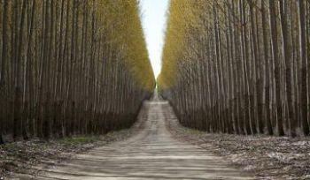 Донецьк оновив 55 доріг до Євро-2012