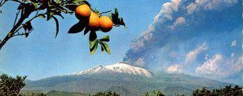 Сицилийские апельсины: генно-модифицированные и очень полезные
